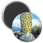 Flowering Mountain Succulent Magnets