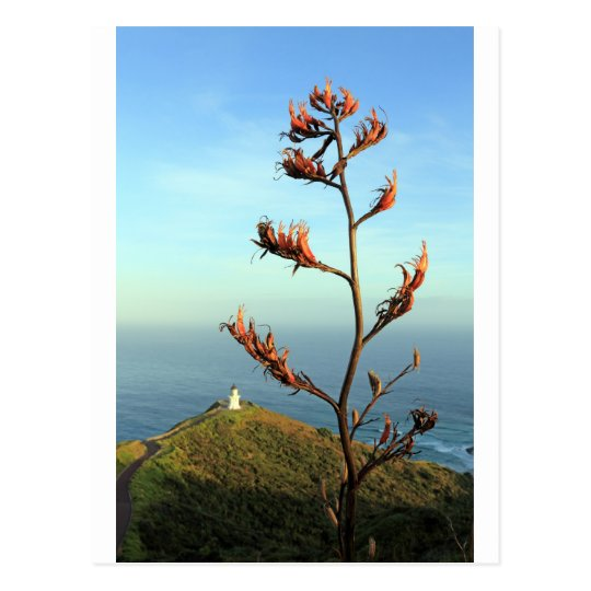 Flowering New Zealand flax Cape Reinga Postcard