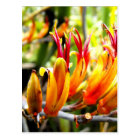 Flowering New Zealand Flax Postcard