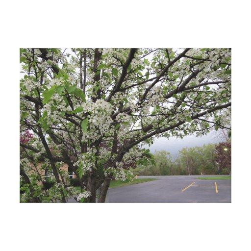 Flowering Pear Tree Canvas Print