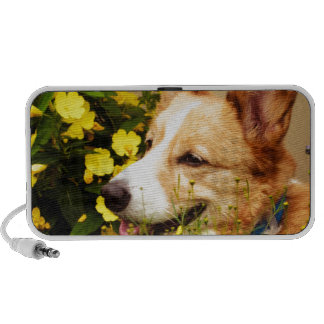Flowering Pembroke Welsh Corgi iPod Speaker
