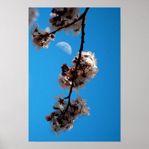 Flowering Plum Tree & Moon Posters