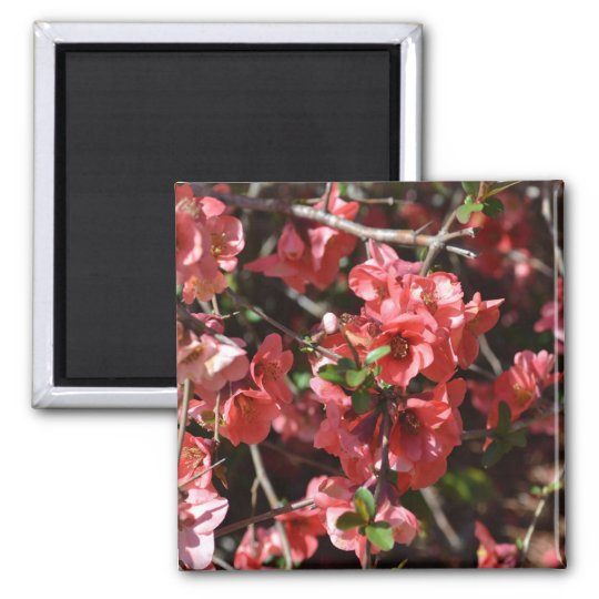 Flowering Quince-Five Square Magnet