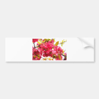 Flowering Quince Japan Pink Spring Flowers Shrub Bumper Sticker