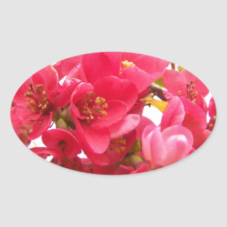Flowering Quince Japan Pink Spring Flowers Shrub Oval Sticker