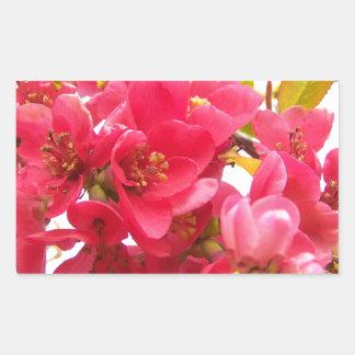 Flowering Quince Japan Pink Spring Flowers Shrub Rectangular Sticker