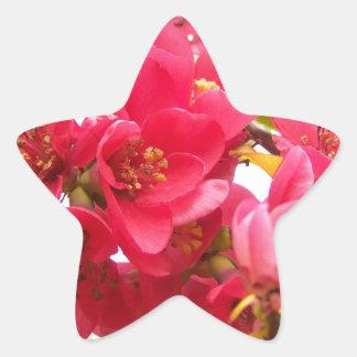 Flowering Quince Japan Pink Spring Flowers Shrub Star Sticker