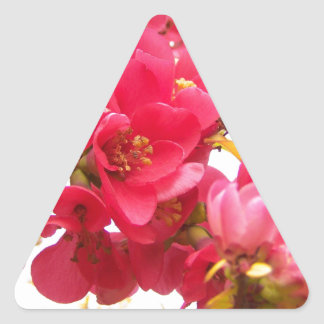 Flowering Quince Japan Pink Spring Flowers Shrub Triangle Sticker
