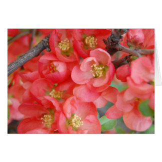 Flowering Quince Note Card