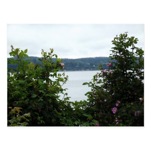 Flowering Shrubs on the Water Postcards