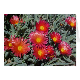 Flowering Succulents Greeting Card