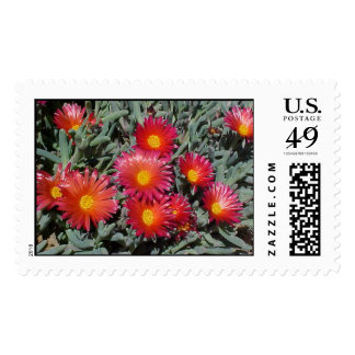 Flowering Succulents Stamps