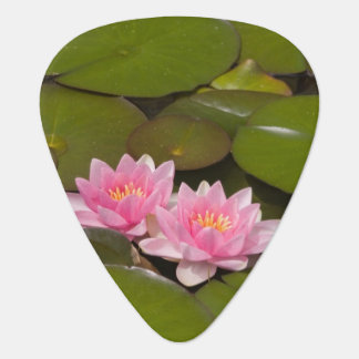 Flowering water lilies guitar pick
