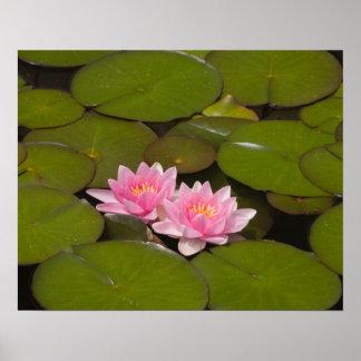 Flowering water lilies poster