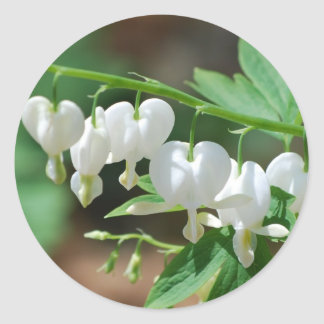 Flowering White Bleeding Heart Stickers