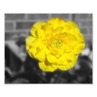 FlowerIV - Yellow Flower On Grey Background Art Photo