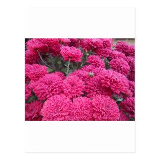 Flowers-001.JPG Postcard