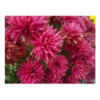 Flowers-005.JPG Postcard