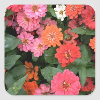 Flowers 15 framed version, colorful flowers bloomi square sticker