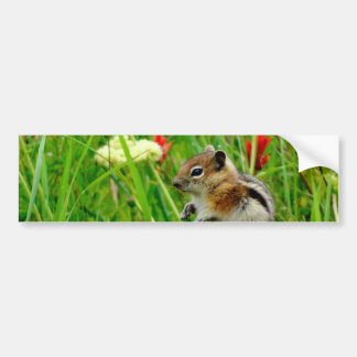 Flowers and cute cubby little Chipmunk Bumper Stickers