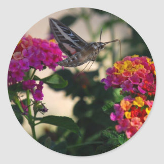 Flowers and Moth Round Stickers