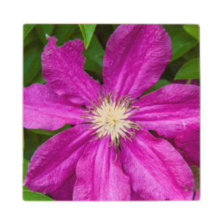 Flowers at Robinette's Apple Haus and Gift Barn Wood Coaster