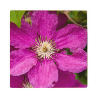 Flowers At Robinette's Apple Haus & Gift Barn Wood Coaster