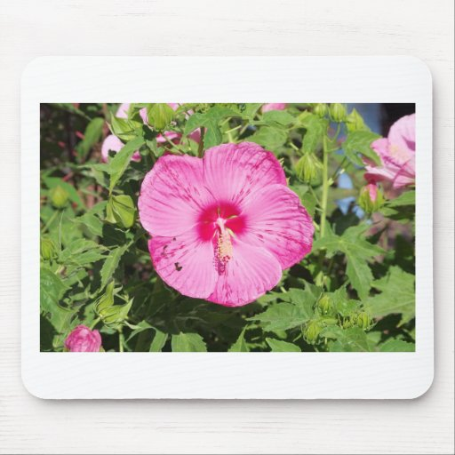 Flowers at the farmers market mouse pad