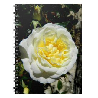 Flowers beautiful white rose notebooks