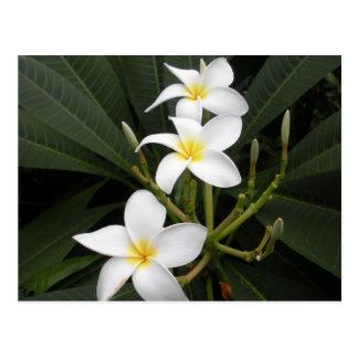 Flowers - Bellingrath Botanical Gardens Postcard