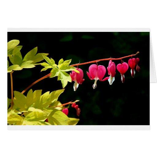 Flowers :-) Bleeding hearts Greeting Cards