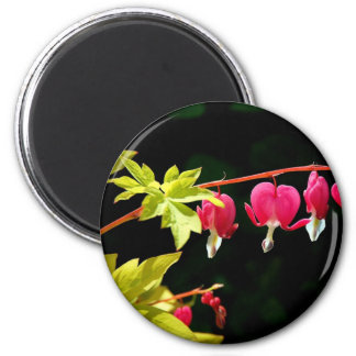 Flowers :-) Bleeding hearts Fridge Magnets