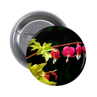 Flowers :-) Bleeding hearts Pinback Button