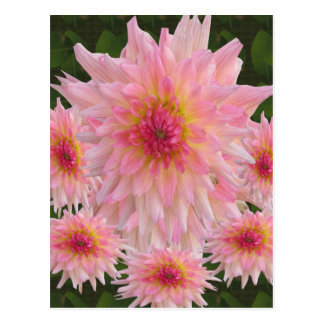 Flowers Colorful return+gifts giveaway party gifts Postcard