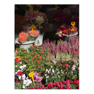 flowers displayed for sale in the Campo de' Postcard
