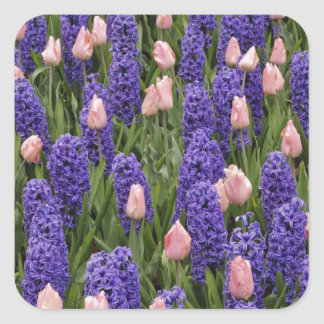 Flowers from Holland, hyacinths and pink tulips Square Sticker