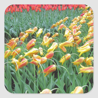 Flowers from Holland Square Sticker