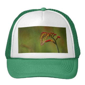 Flowers in Bud Cap