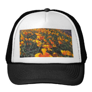 Flowers In Dry Cap
