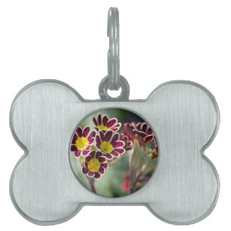 flowers in the garden pet tag