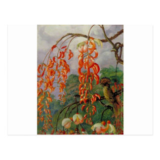 Flowers of a Coral Tree and King of the Flycatcher Postcard