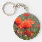 Flowers of common poppy in a field. key ring