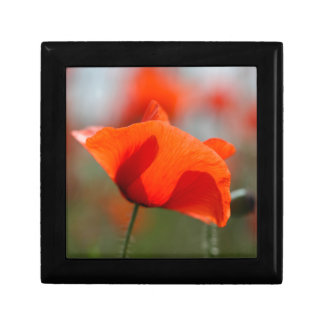 Flowers of common poppy in a field. small square gift box