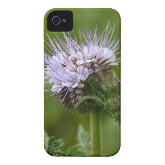 Flowers of the lacy phacelia iPhone 4 Case-Mate case