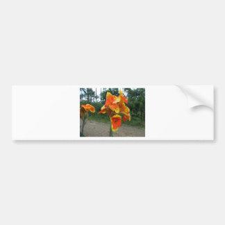 Flowers on plants, Costa Rica. Bumper Sticker