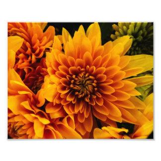 Flowers Photo Print