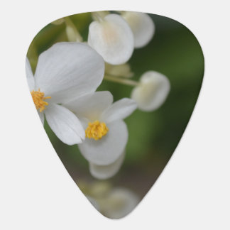 Flowers Plectrum