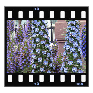 flowers- pride of madera photographic print