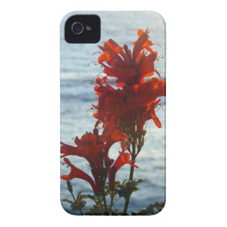 Flowery iPhone4 Case Case-Mate iPhone 4 Cases