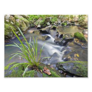 Flowing Creek Cairns Australia Photo Print